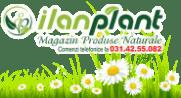 Ilan Plant logo